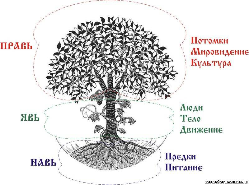 Древо рода b фундамент здравы