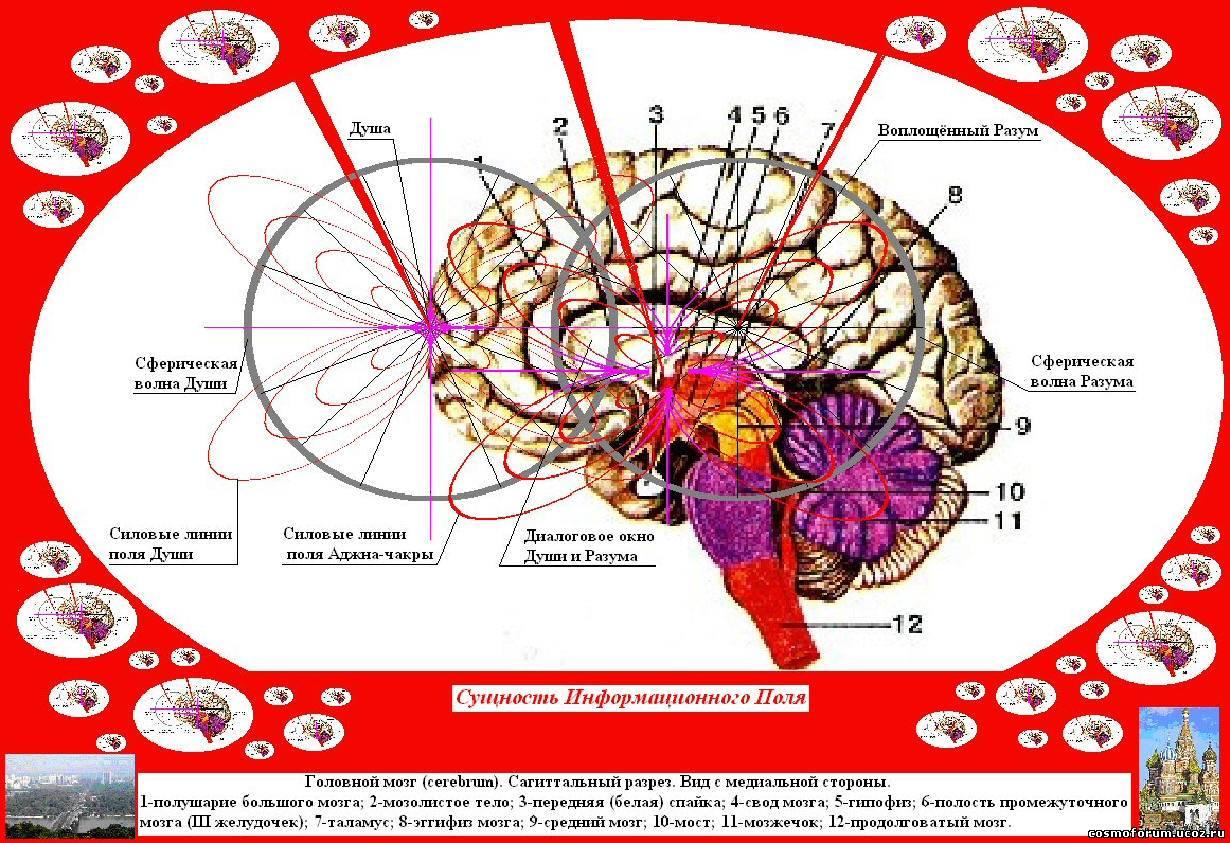 Как связать ум и волю